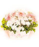 Снимка от Кошница с гербери и хризантеми - Нежна романтика